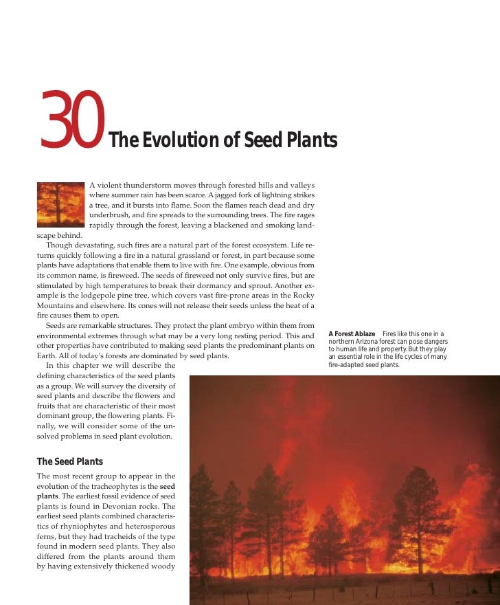 30                    The Evolution of Seed Plants                 A violent thunderstorm moves through forested hills and...