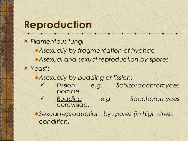 Describe asexual reproduction in yeasts
