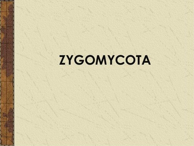 Zygomycota asexual reproduction budding