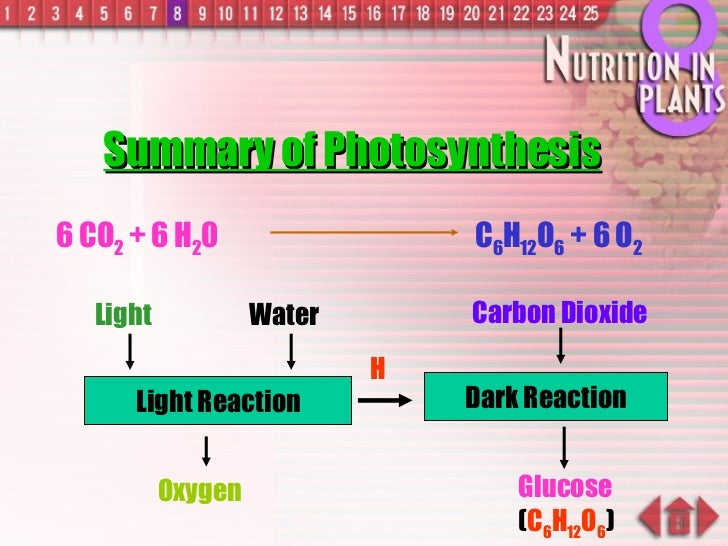 Dark Reaction H Summary of Photosynthesis Water Oxygen Glucose ( C 6 H 12 O 6 ) Light Reaction 6 CO 2  + 6 H 2 0 C 6 H 12 ...