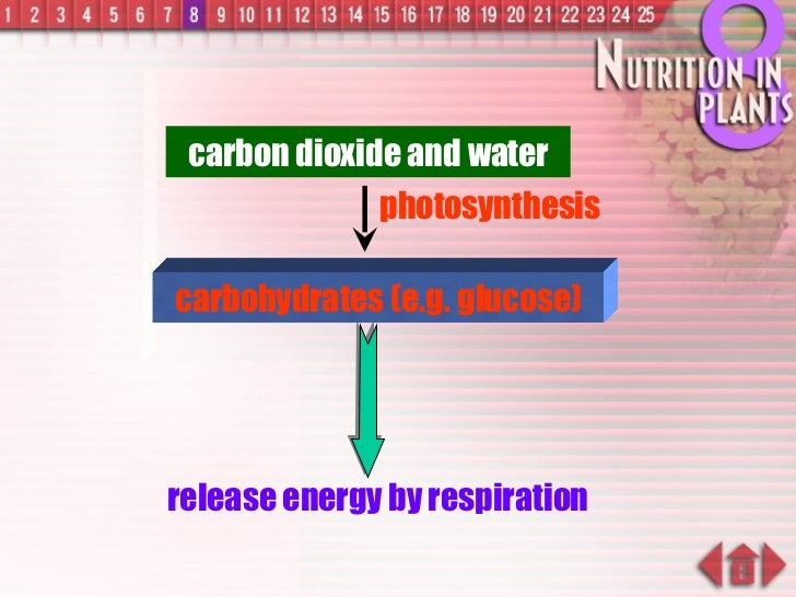 carbohydrates (e.g. glucose) carbon dioxide and water release energy by respiration photosynthesis