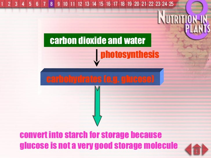 convert into starch for storage because glucose is not a very good storage molecule carbohydrates (e.g. glucose) carbon di...