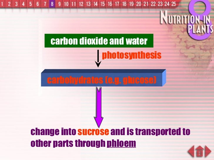 change into  sucrose  and is transported to other parts through  phloem carbohydrates (e.g. glucose) carbon dioxide and wa...