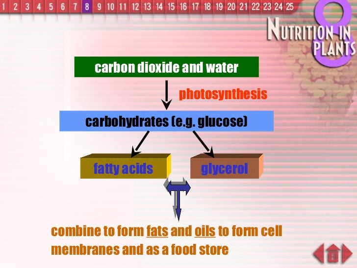 carbon dioxide and water photosynthesis carbohydrates (e.g. glucose) combine to form  fats  and  oils  to form cell membra...
