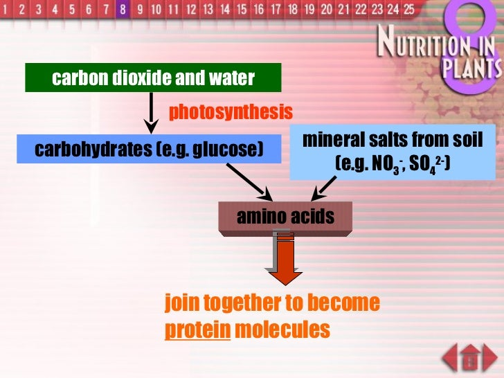 carbon dioxide and water photosynthesis carbohydrates (e.g. glucose) mineral salts from soil (e.g. NO 3 - , SO 4 2- ) amin...