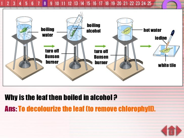 Why is the leaf then boiled in alcohol ? Ans:  To decolourize the leaf (to remove chlorophyll). boiling water turn off Bun...