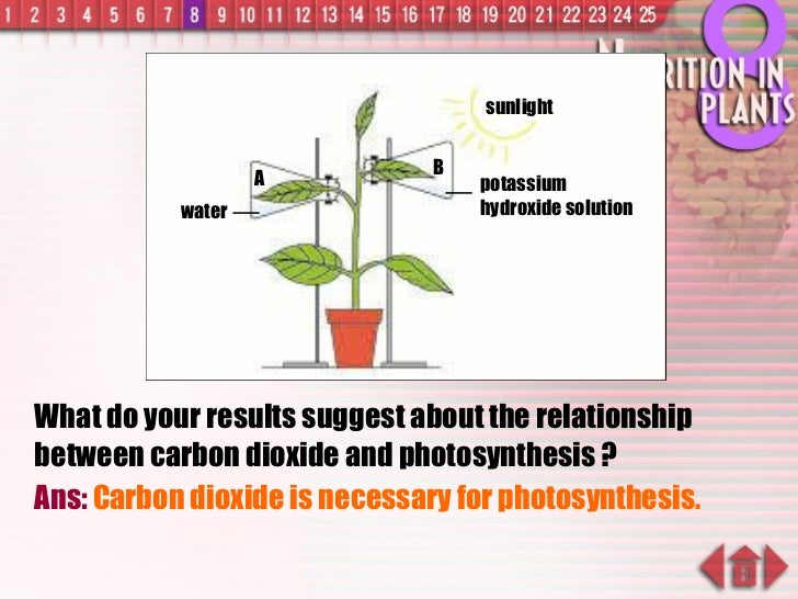 What do your results suggest about the relationship between carbon dioxide and photosynthesis ? Ans:  Carbon dioxide is ne...
