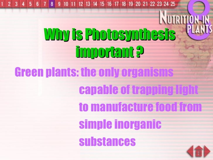 Why is Photosynthesis important ? Green plants: the only organisms capable of trapping light to manufacture food from simp...