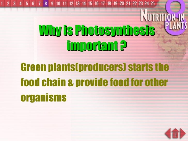 Why is Photosynthesis important ? <ul><ul><li>Green plants(producers) starts the food chain & provide food for other organ...
