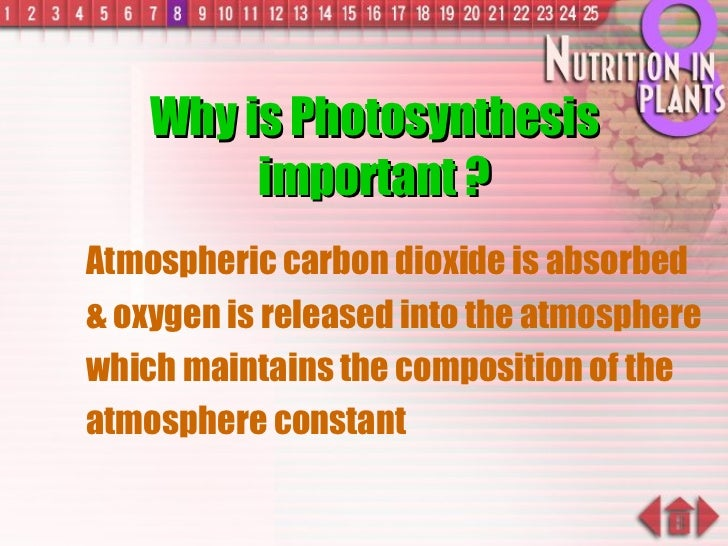Why is Photosynthesis important ? <ul><ul><li>Atmospheric carbon dioxide is absorbed & oxygen is released into the atmosph...