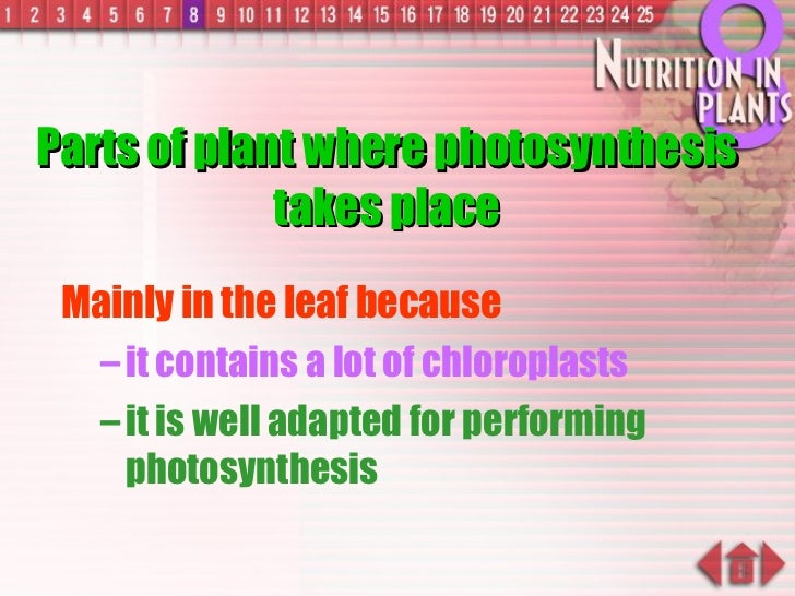 Parts of plant where photosynthesis takes place <ul><li>Mainly in the leaf because   </li></ul><ul><ul><li>it contains a l...