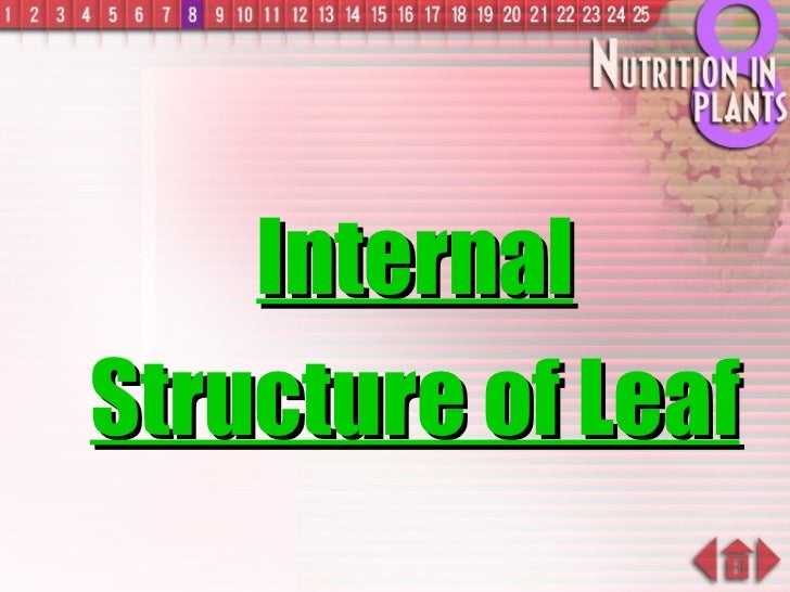 Internal Structure of Leaf