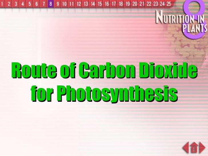 Route of Carbon Dioxide for Photosynthesis