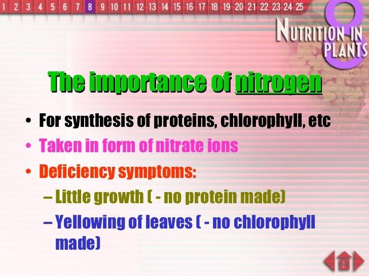 The importance of  nitrogen <ul><li>For synthesis of proteins, chlorophyll, etc </li></ul><ul><li>Taken in form of nitrate...