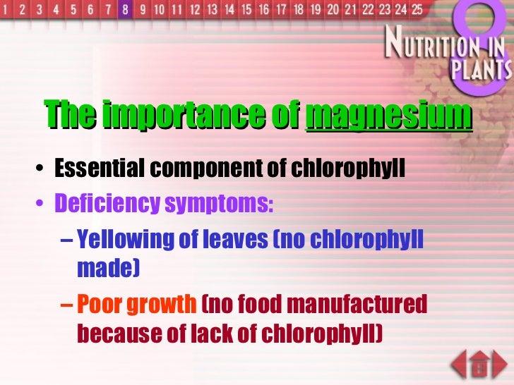 The importance of  magnesium <ul><li>Essential component of chlorophyll </li></ul><ul><li>Deficiency symptoms: </li></ul><...