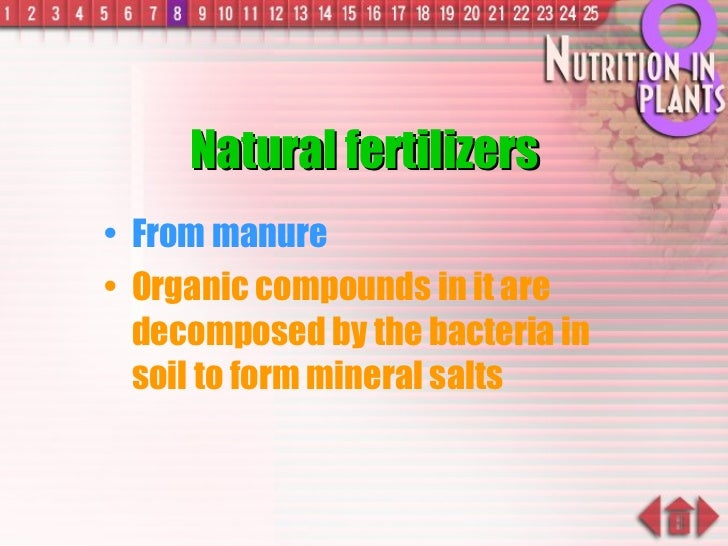 Natural fertilizers <ul><li>From manure </li></ul><ul><li>Organic compounds in it are decomposed by the bacteria in soil t...