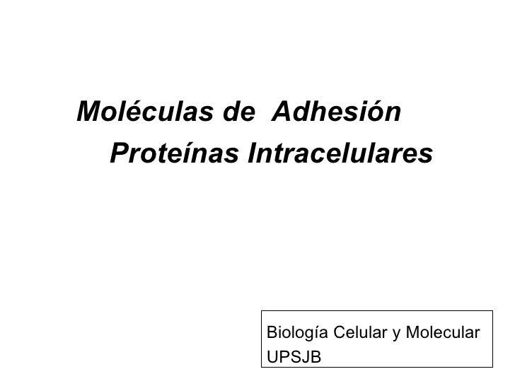 Moléculas de  Adhesión Proteínas Intracelulares Biología Celular y Molecular UPSJB