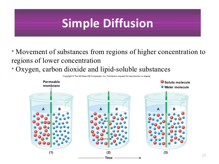 simple diffusion lab activity Patel, amar, semipermeable membranes, diffusion, and osmosis inquiry: concepts through interactive discussion and engaging laboratory activities students will.
