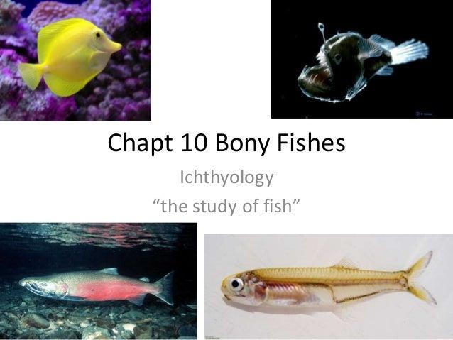 """Chapt 10 Bony FishesIchthyology""""the study of fish"""""""
