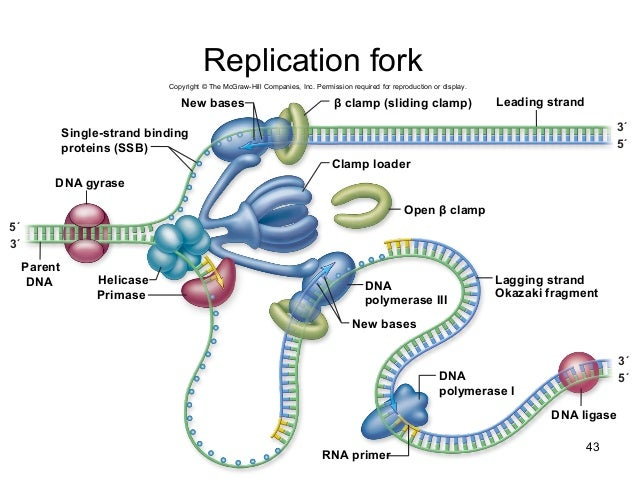Biology 201 Chapter 14