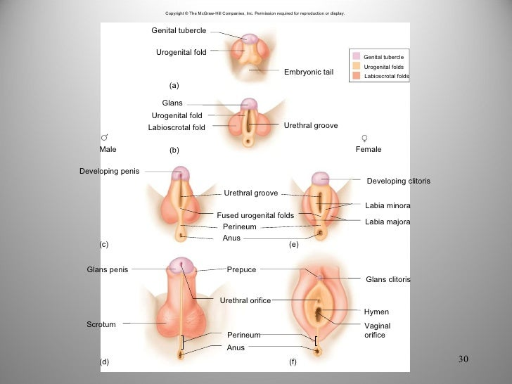 Growth on clitoris