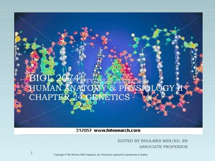 BIOL 2074: HUMAN ANATOMY & PHYSIOLOGY II CHAPTER 24 GENETICS EDITED BY BHOLMES MSN/ED, RN ASSOCIATE PROFESSOR Copyright © ...