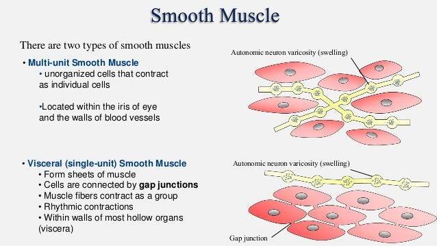 Types of movement anatomy