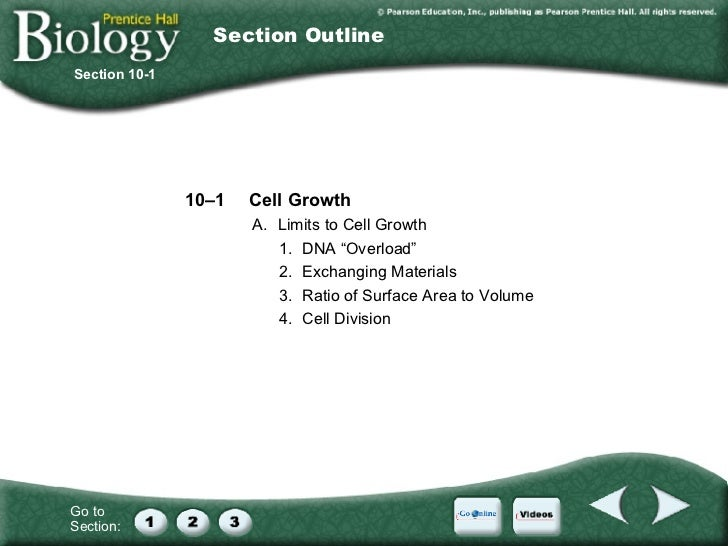 Division » Chapter 10 Cell Growth And Division Vocabulary Review ...