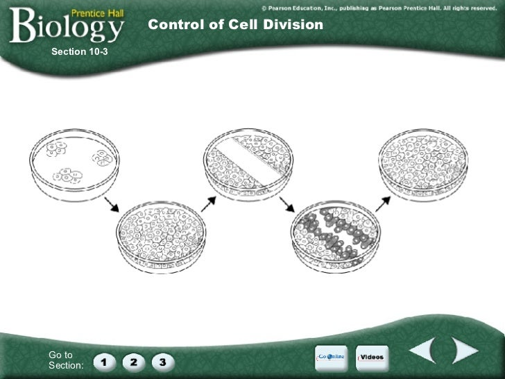 Section 10 2 Cell Division Worksheet Answers - Deployday