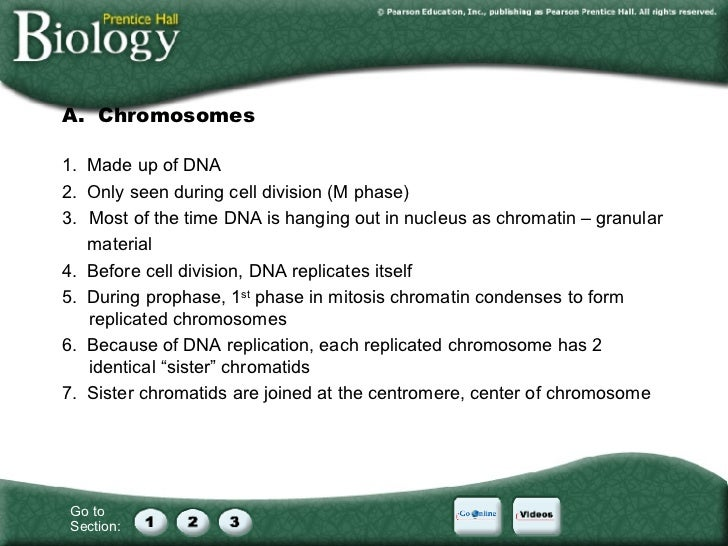 Cell Division Worksheet Section 8 1 Chromosomes Kidz Activities