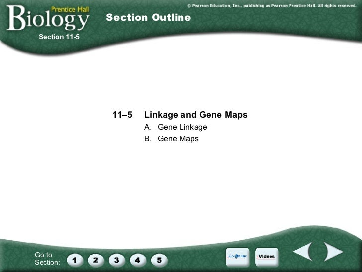 Chapter 11: Introduction to Genetics on