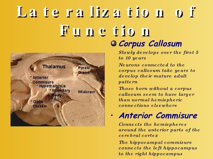 Chapter 14: Lateralization & Language