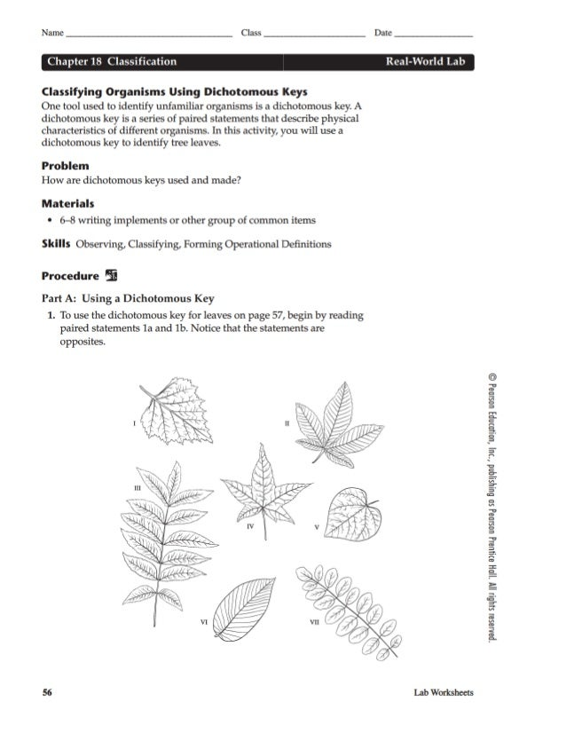 Leaf Dichotomous Key Worksheet – Dichotomous Key Worksheet