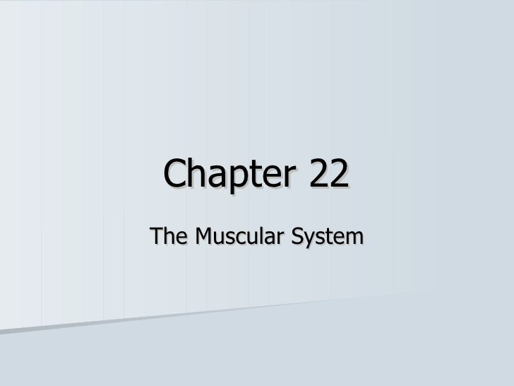 Chapter 22 The Muscular System