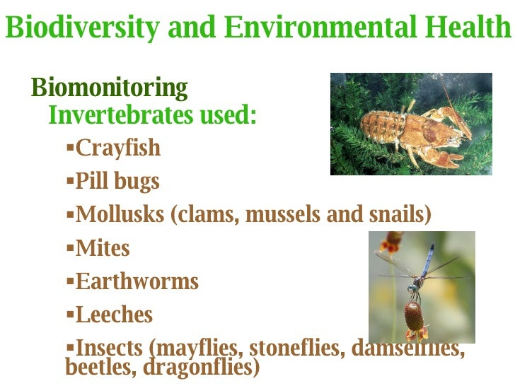environmental notes Environmental challenge ecosystem ecology most everyone has seen a food web the food web is made up of organisms at different levels of feeding, known as.