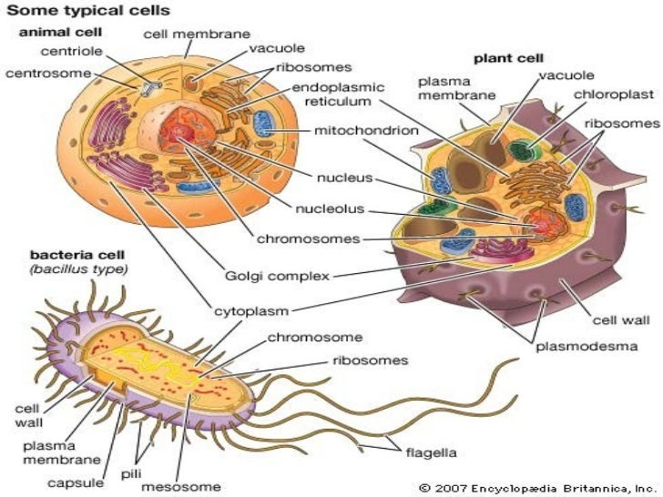 Chapter 7 Cell Structure & Function - Pre-Aice Biology