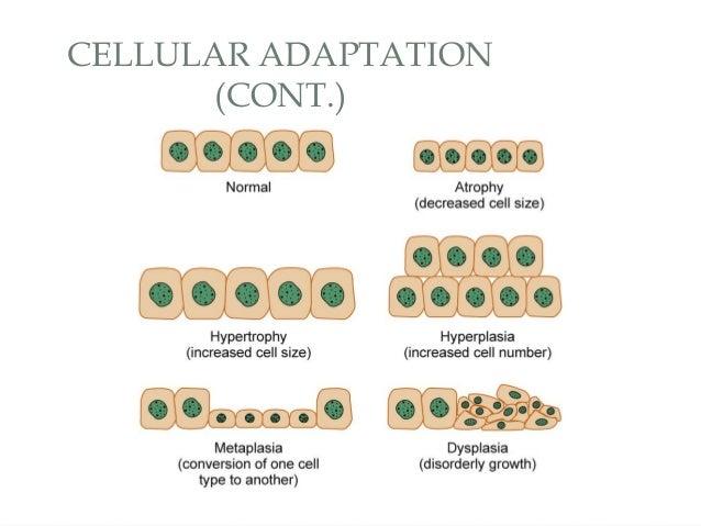 Cellular Adaptation To Stress