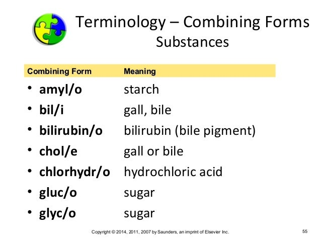 Medical Terminology Chapter 5