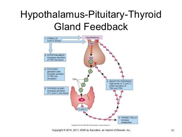 Chapter 016, Hypothalamus