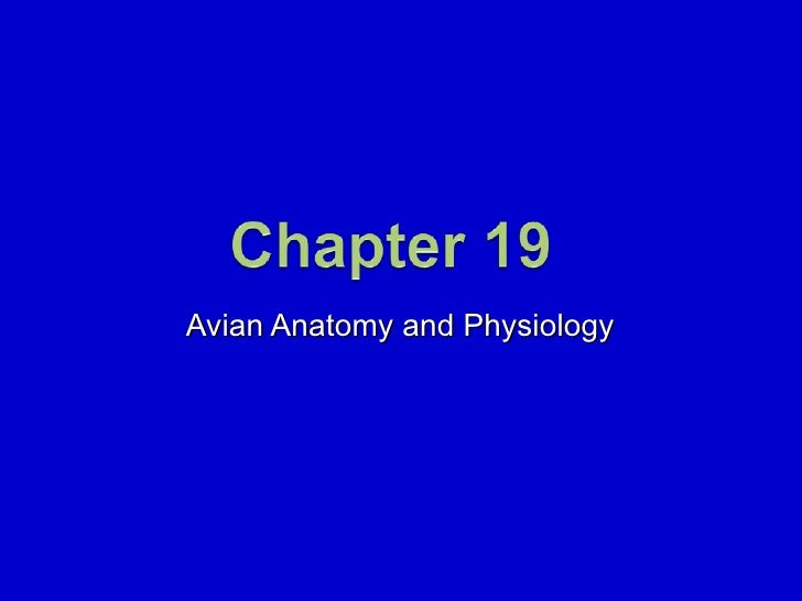 Avian Anatomy and Physiology