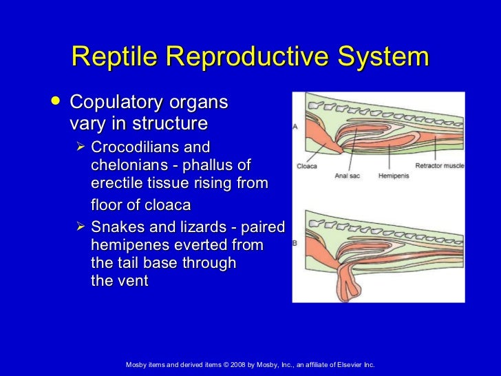 20 Amphibian And Reptilian Anatomy And Physiology