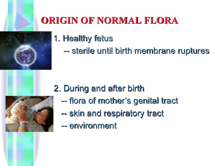 Micro chap 4 part 1 human and microbial interactions for Floar meaning