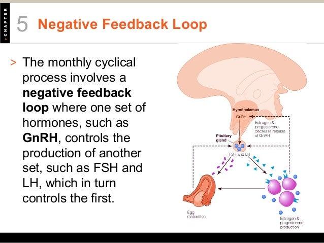 Gnrh Feedback Loop: HLTH201Chapter05