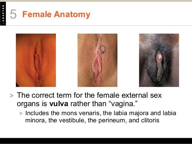 vulva itch #10