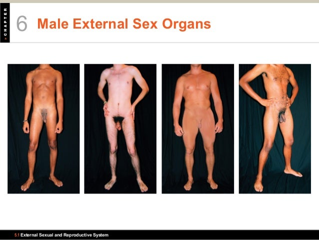 Mens sex organ pictures