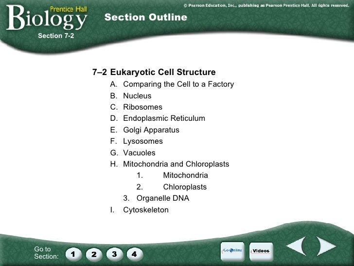 Cell Division Worksheet On Figure 12 1 - section 8 2 ...