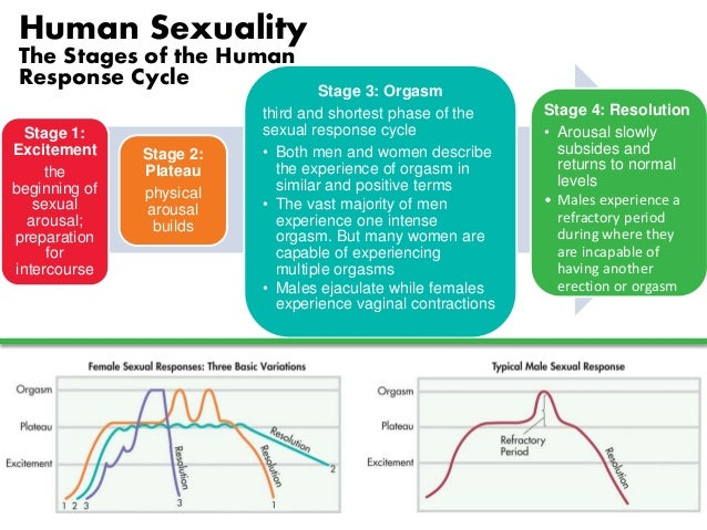 Four stages of human sexual response