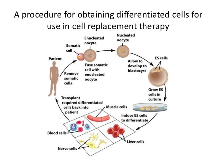 Chapter 1 Cell Biology Intro Cell