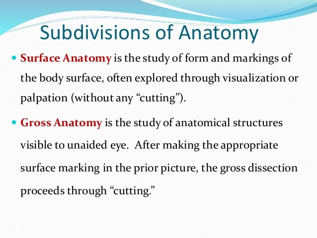 Subdivision of anatomy