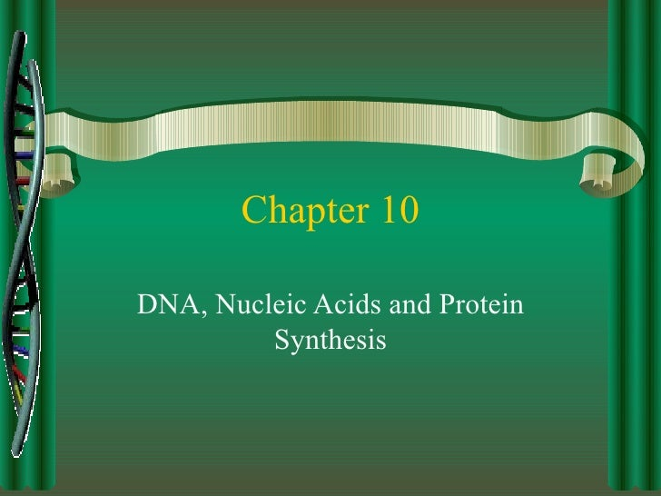 Chapter 10 DNA, Nucleic Acids and Protein Synthesis